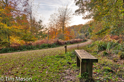 Autumn at Nagshead Nature Reserve