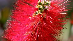 Flor (Pablo Leautaud.) Tags: pex parqueecologicoxochimilco parqueecologico parque xochimilco ciudaddemexico df mexico naturaleza nature pleautaud suelodeconservacion cdmx planta plant flower plantae