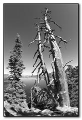 Deadwood at Crater Lake Monochrome (seagr112) Tags: unitedstates oregon craterlake craterlakenationalpark sonya900 bw monochrome snag deadtree volcano extinctvolcano collapsedvolcano cascaderange mountmazama