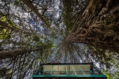 The House in the woods (Explored) (Eduardo Regueiro) Tags: sequoia araucaria house daylight woods lanscape below sky relax home vacation travel joy forest