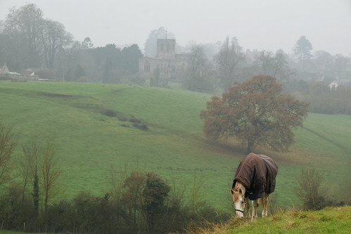 Horse at North Curry