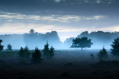 Roydon Common 03/09/2016 (Matthew Dartford) Tags: bw eastanglia blue bokeh fog foggy kingslynn mist misty mono monochrome norfolk roydon roydoncommon tree treeline silhouette
