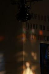 DSC_2527 (timmie_winch) Tags: timwinchphotography helmingham helminghamhalldeer helminghamhall helminghamdeer deer roedeer reddeer fallowdeer nikon d300 nikond300 50400mm sigma50400mmlens sigma wildlife wild wildlifephotographer wildlifephotography 2016 november november2016