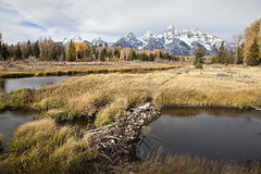 Schwabachers Landing and Beaver Dam (ramislevy) Tags: robertamislevyphotography grandtetons snakeriver beaver autumn fall wyoming jackson dam floodplain