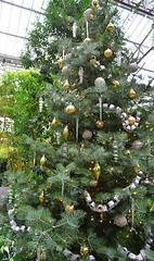 Silver and Gold Tree (pjpink) Tags: christmas christmassy christmasy christmastree tree festive decorations longwoodgardens gardens pa pennsylvania november 2016 fall pjpink
