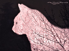 The 4 seasons: winter (laurek.photography) Tags: neige snow winter cat trees hiver pet animal nature