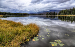 A Peaceful Place (AnyMotion) Tags: lake see grass gras forest wald sky himmel trees bume water wasser 2016 anymotion travel reisen nature natur plants pflanzen eaglelake tweedsmuirprovincialparkbritish columbia canada kanada colours colors farben 6d canoneos6d
