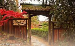 Gate to the Gardens (mjdrhd) Tags: wood door entrance fog mist garden nature