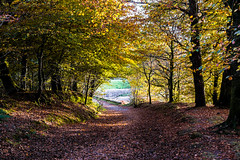 Woodland Track in November_NK2_3243 (Jean Fry) Tags: burrator dartmoor dartmoornationalpark devon englanduk nationalparks trees uk westcountry woodland woods tracks autumn autumnleaves