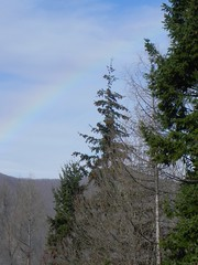 DSCN7491 (Gianluigi Roda / Photographer) Tags: apennines lateautumn trees rainbows larch