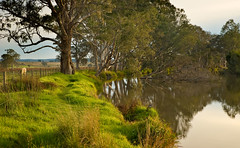 Latrobe River East Gippsland (laurie.g.w) Tags: trees sunset rural creek river stream bank australia victoria east waterway gippsland latrobe