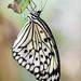 Stratford Butterfly Farm_2
