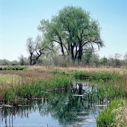 Photo - Cottonwood and wetland on OSMP.