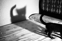 "P8105094. ""Shadowplay"". (shoot raw) Tags: light shadow monochrome cat bed bedroom olympus filter linda grainy ep2 sooc"