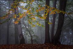 Sintomi autunnali [ Explored ] (beppeverge) Tags: autumn trees mist fall fog foglie alberi season fav50 nebbia autunno valsesia fav100 fav200 explored tovo impressedbeauty mygearandme mygearandmepremium mygearandmebronze mygearandmesilver mygearandmegold mygearandmeplatinum mygearandmediamond beppeverge