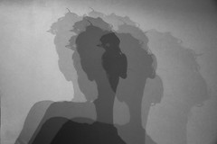The Turing option (Diane Northman) Tags: portrait bw bird shadows repetition conceptual minimalist turing
