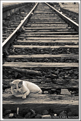"El gato que soñaba con trenes • <a style=""font-size:0.8em;"" href=""http://www.flickr.com/photos/15452905@N02/10465651443/"" target=""_blank"">View on Flickr</a>"
