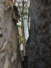 2013-10-21_18-16-53_HDR (jeduardofn ~ Brasil) Tags: texture textura treetrunk tronco