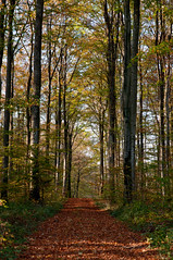 Fall (Franois Hernandez) Tags: autumn france tree fall forest automne countryside nikon village path alsace tamron franois campagne arbre fh chemin fort hernandez d90 tamron2470 nikond90 drulingen