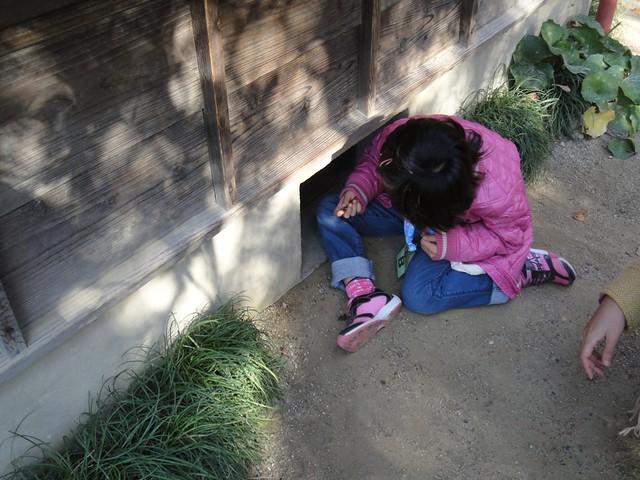 娘はドングリを手に取ると「まっくろくろすけ、出ておいで~」。|サツキとメイの家