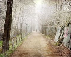 Frosty Winter (MargoLuc) Tags: park morning trees winter people woman white man black cold texture leaves landscape couple mood path walk perspective frosty dreamy magical