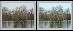 Cormorant flying in the distance - 3d crossview (Brian Flint) Tags: 3d cormorant cambridgeshire phalacrocoraxcarbo crossview paxtonpits twincamerasetup nikkor30110mmlens nikon1v1camera