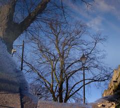 Project365-Day19 (farouq_taj) Tags: reflection tree streetlamp pavement windsor riverthames