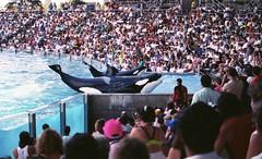 1990617 (72grande) Tags: orlando florida seaworld 1990