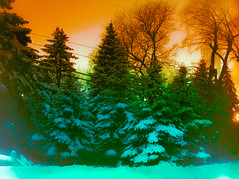fstp2 (photonexploiter) Tags: trees winter snow skies michigan evergreens
