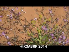 #Rose # #Bouquet #flower #flowers # # # # #Saudi #Bahrain #Oman #Qatar #Emirates #oman #Malaysia #dxb ## # # # # # #  #Spring #plant # #nature #video    #     (photography AbdullahAlSaeed) Tags: flowers plant flower nature rose bahrain video spring emirates malaysia saudi bouquet oman qatar dxb
