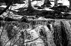 Paysage Aubrac (Perrine_As) Tags: horse white snow black france blanco landscape cheval nikon noir y negro waterfalls neige paysage cascade blanc aveyron aubrac noierblanc d5100 nikond5100