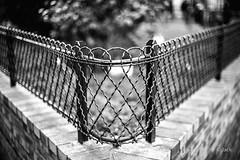 DoF (Jack from Paris) Tags: leica bw blur detail lines dof noiretblanc bokeh cosina rangefinder m type monochrom capture simple mode pdc 240 lightroom f12 graphisme dng 10770 nx2 tlmtrique voigtlandernokton50mmf11 l1001199bw