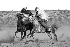 Fantasia Riders  /  Algeria - laghouat - 2013 (Bougherbal Ammar Redouane) Tags: horse cheval fantasia 5d cavalier ammar algrie sud riders chevaux alger markiii redouane 2013 laghouat bougherbal
