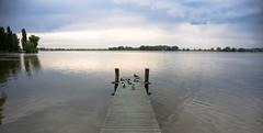 Lago papere (FiPremo) Tags:
