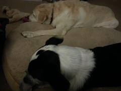 Max & Olivia (missjessicab) Tags: dogs olivia 1750 maxxie