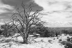 Canyonlands National Park Utah USA (MalaneyStuff) Tags: nikon d5100 usa utah canyon canyonlands canyonland bw national park canyonlandsnationalpark
