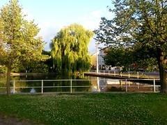 14_2506_202849 (Sarkana) Tags: deutschland sachsen germany saxony rackwitz zschortau tree teich pond abenddämmerung nightfall weide willow salix