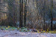 Forest (jaceek81) Tags: forest las jesie autumn november listopad polska lubuskie natura fujifilm xt10 xf60mm