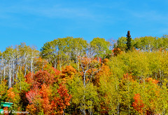 (calemarie137) Tags: fall leaves colors mountians