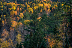 2016-10-14_8642.jpg (flyfast 70) Tags: cascades eau nature water feuillage automne fall rivire photographie trees foto fort river forest photography lake colors couleurs chte madeleinepunde stcme arbres stcme chte fort rivire madeleinepunde