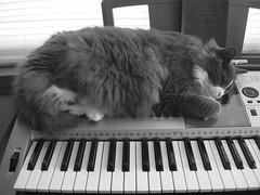 2010- Pandora (teresamarkos) Tags: pandora cat cats kitten kittens felines feline