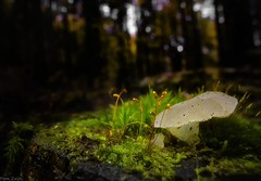 Forest walks (dRvECtoR) Tags: dualiso magic lantern dual iso forest macro wide angle venus laowa 15mm canon 6d close up closeup