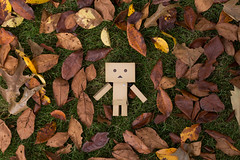 Blending in with the leaves (Arielle.Nadel) Tags: danbo danboard revoltech yotsuba leaves autumn toyphotography