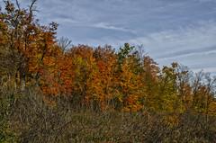 Autumn Colours (Paul B0udreau) Tags: autumn fall colours haltonhills nikkor1855mm photoshop canada ontario paulboudreauphotography niagara d5100 nikon nikond5100 raw layer