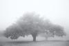 chestnut tree (2) (StefanSpeidel) Tags: hokutoshi japan oizumi stefanspeidel yamanashi yatsugatake fog elitegalleryaoi bestcapturesaoi