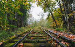 They Pass Through Life Like Trains (John Westrock) Tags: traintracks nature autumn fall autumncolors trees washington pacificnorthwest snoqualmie canoneos5dmarkiii canonef1635mmf4lis johnwestrock