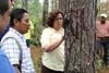 Lucha contra el gorgojo descortezador del pino