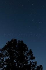 Cu estrelado - Starry sky (adelaidephotos) Tags: cu estrelado estrelas sky starry stars noite amanhecer night dawn yakipoint parquenacional grandcanyon nationalpark estadosunidos eua unitedstates usa mariaadelaidesilva