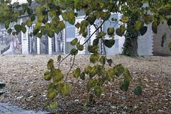 Unbersehbar - es herbstelt berall (borntobewild1946) Tags: herbst nrw nordrheinwestfalen copyrightbyberndloosborntobewild1946 bltter bobbolandia freizeitpark neurath grevenbroich baum zweige ste