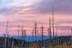 Pastel Sunset (MarcCooper_1950) Tags: grandcanyonnorthrim cloudssunsettreeslandscapenikon d810 scenery arizona pastels purple pink blue tress aspsns